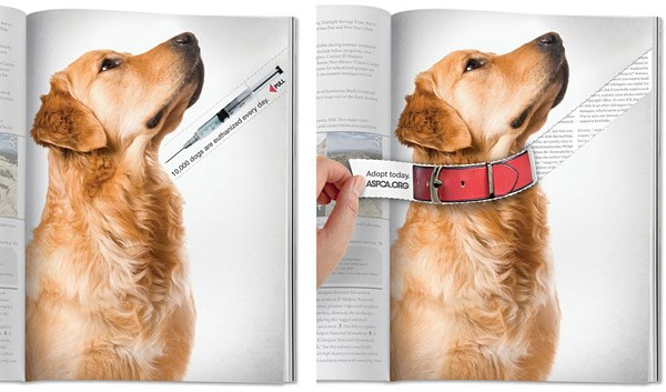 save-a-dogs-life-magazine-tear-ad-greenville-nc-digital-marketing