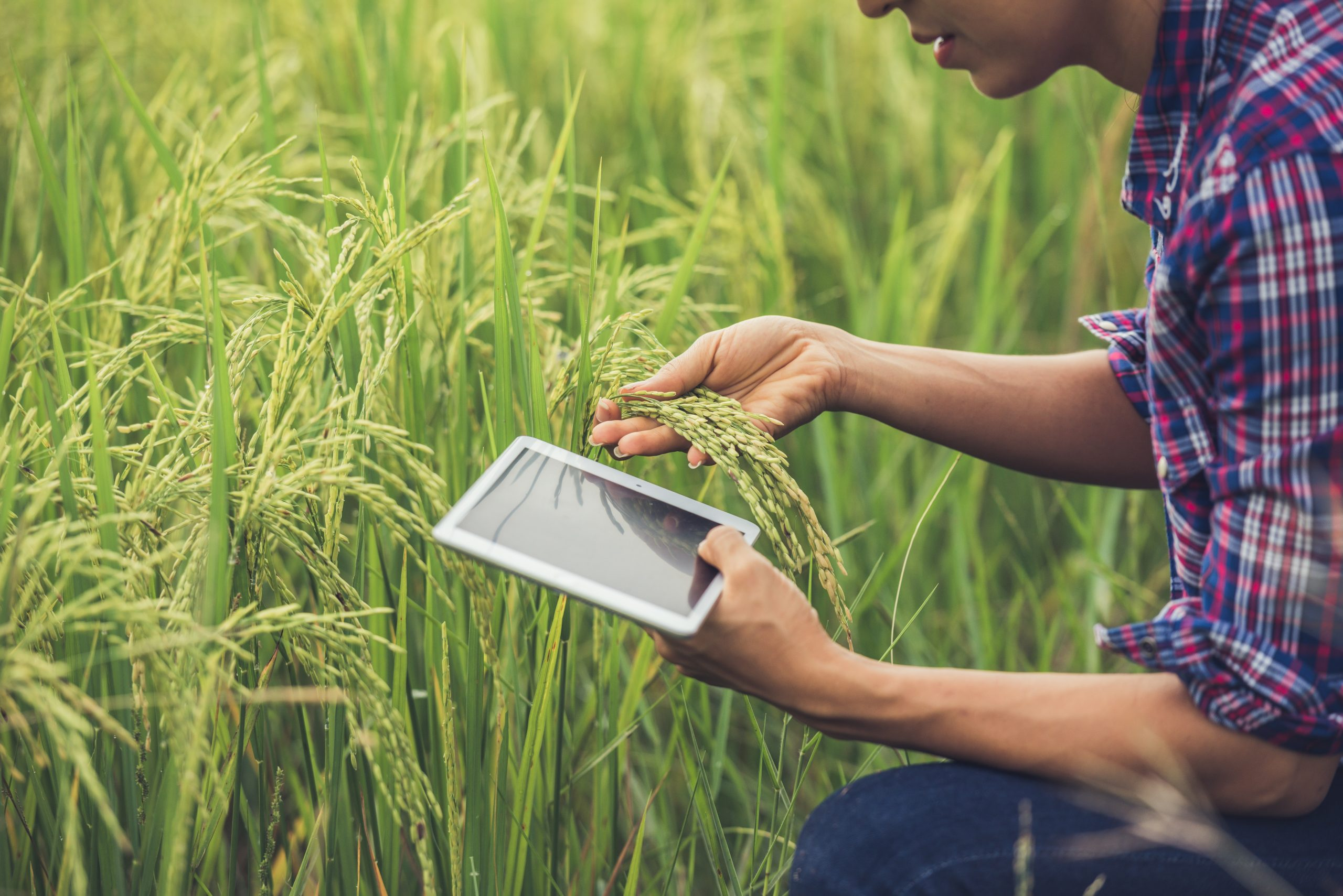 digital marketing for farming and agriculture businesses